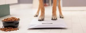 Zadbaj o zdrowie i prawidłowy rozwój swojego psa